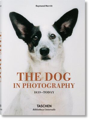 DOG IN PHOTOGRAPHY 1839 TODAY (AL/FR/IN)